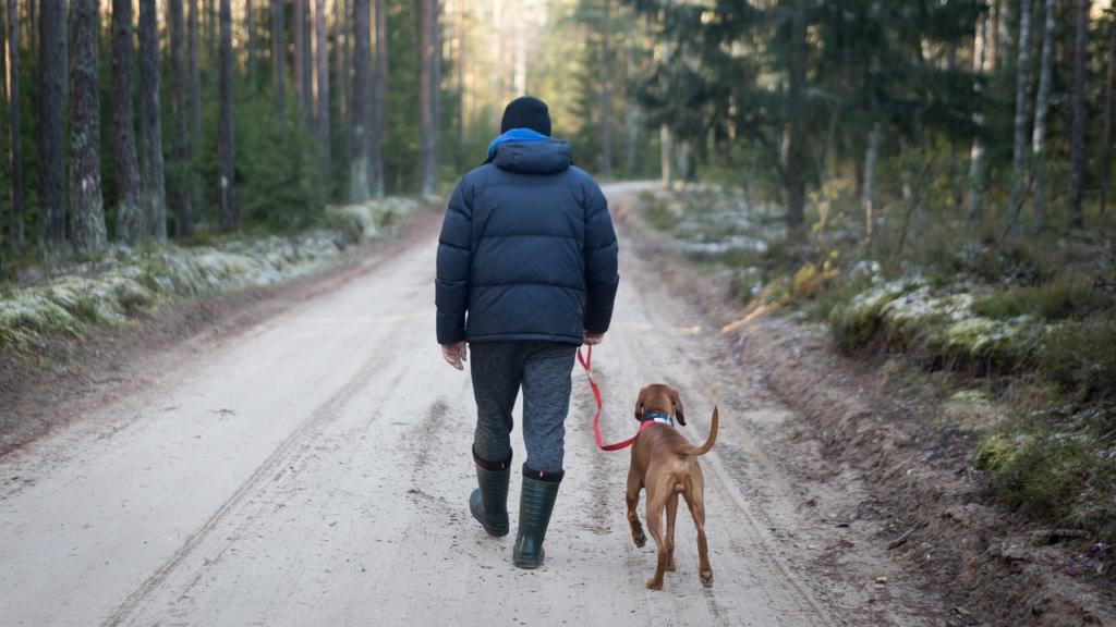 Lesiones. Paseo con Perro